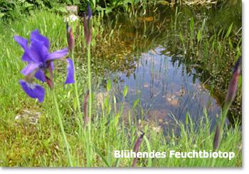Löss-Garten 07