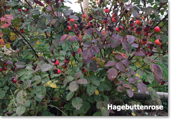 Mietshausgarten 02