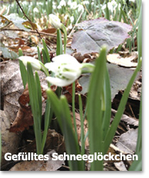 Sumpfgarten 03