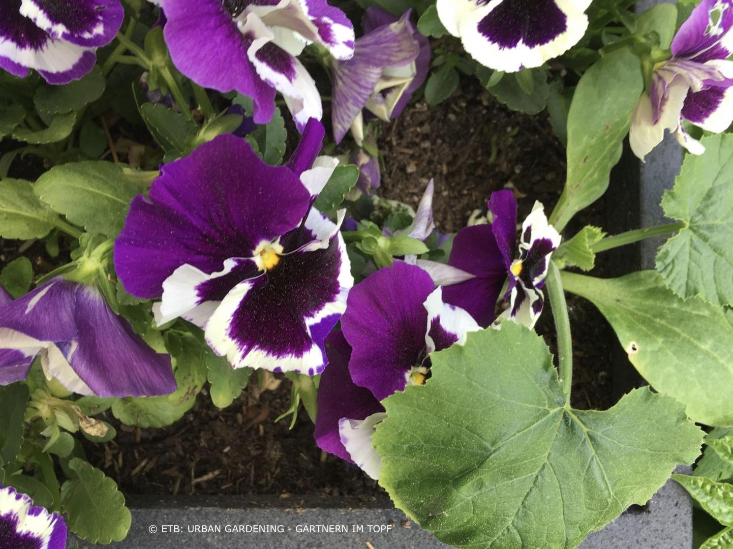 Nutzpflanzen und Zierpflanzen in einem Blumenkasten